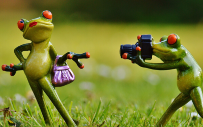 Frog figures making photos
