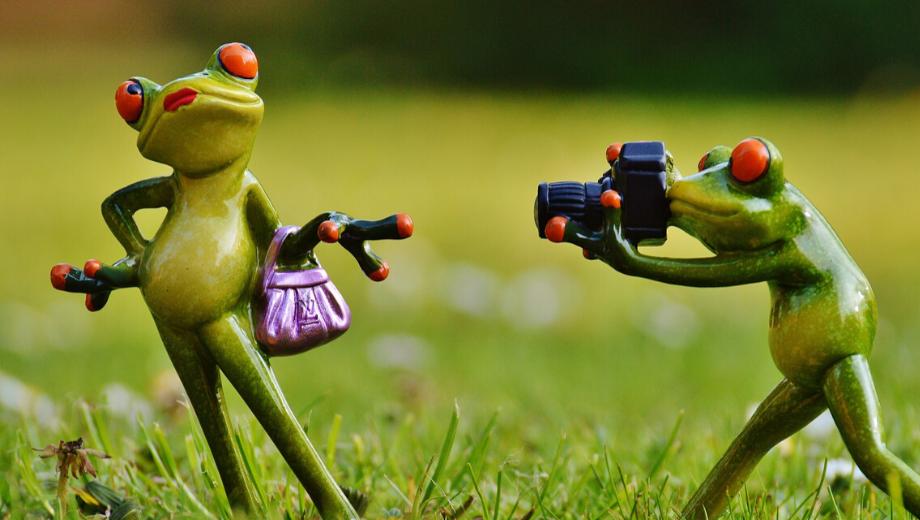 Frog figures making photos